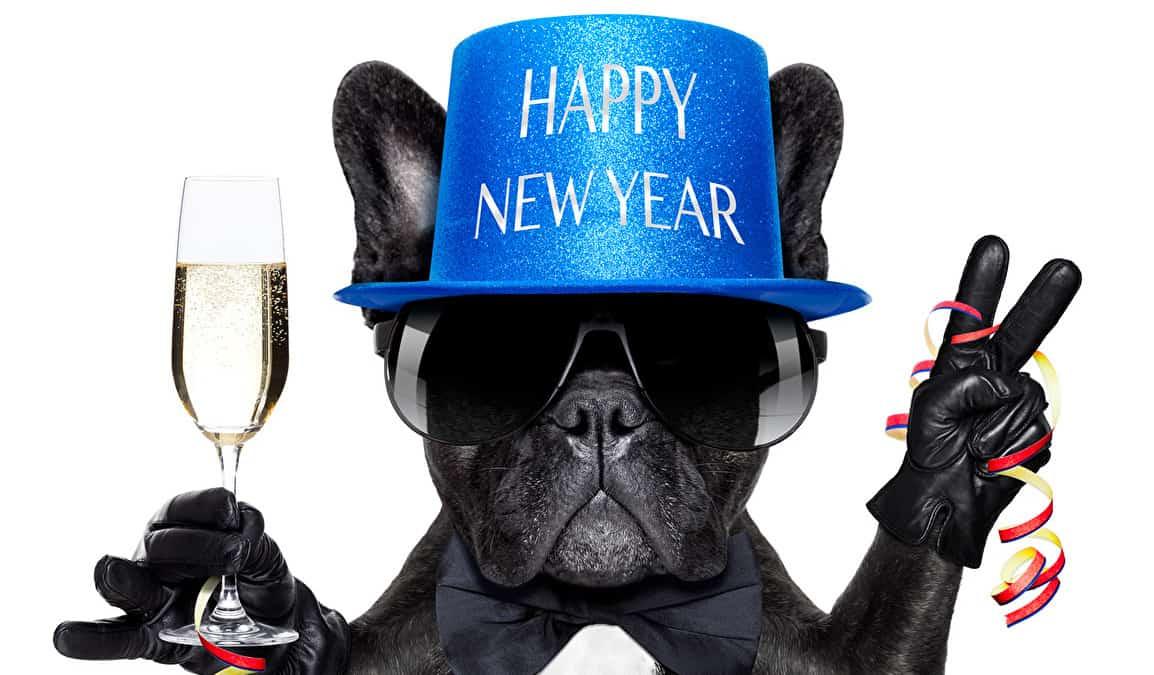 Christmas Dogs Champagne 507289 - Цены на услуги студии