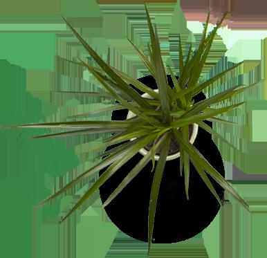 plant - Майами